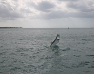 tarpon-fishing-101