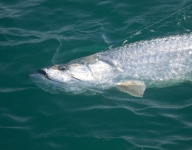 tarpon-fishing-108