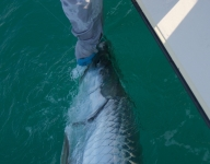 tarpon-fishing-109