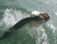 tarpon-fishing-115