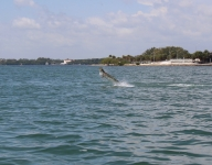 tarpon-fishing-128