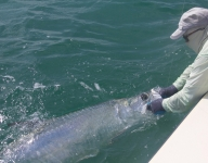 tarpon-fishing-134