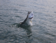 tarpon-fishing-147