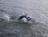 tarpon-fishing-148