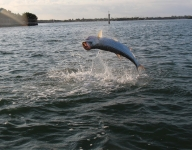 tarpon-fishing-153