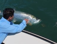 tarpon-fishing-165