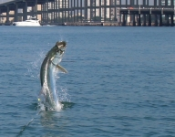 tarpon-fishing-177