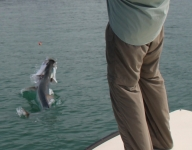 tarpon-fishing-182