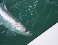 tarpon-fishing-205
