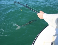 tarpon-fishing-207