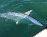 tarpon-fishing-209