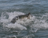 tarpon-fishing-237
