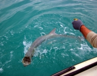 tarpon-fishing-253