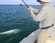 tarpon-fishing-262