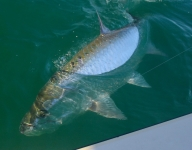 tarpon-fishing-264