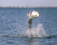 tarpon-fishing-273