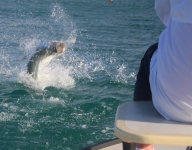 tarpon-fishing-274