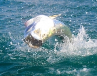 tarpon-fishing-281