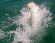 tarpon-fishing-290