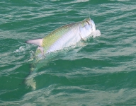 tarpon-fishing-292