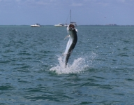 tarpon-fishing-295
