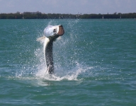 tarpon-fishing-297