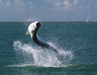 tarpon-fishing-300