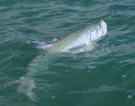 tarpon-fishing-307