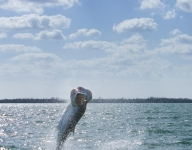 tarpon-fishing-31