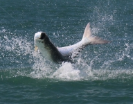 tarpon-fishing-318