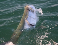 tarpon-fishing-325