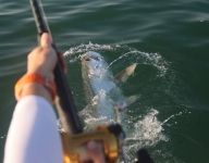 tarpon-fishing-328