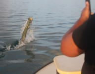 tarpon-fishing-334