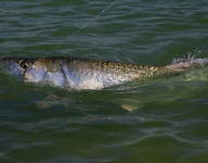 tarpon-fishing-341