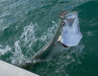 tarpon-fishing-35