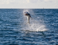 tarpon-fishing-379