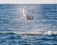 tarpon-fishing-380