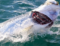 tarpon-fishing-384
