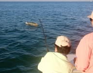 tarpon-fishing-386