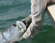 tarpon-fishing-51