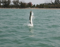 tarpon-fishing-53