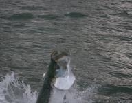 tarpon-fishing-62