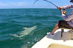 Shark Fishing Miami