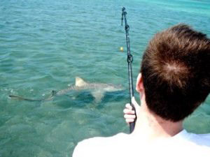 Lemon shark fishing Miami