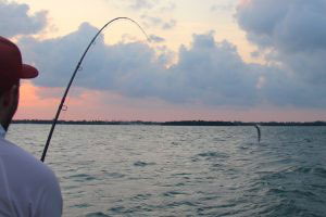 Fly Fishing Biscayne Bay
